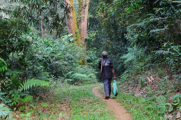 Farmer walking through forest earmarked for palm oil plantation. Southwest Region, Cameroon