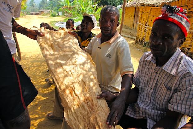 Barkcloth. Lipenja II, Southwest Region, Cameroon