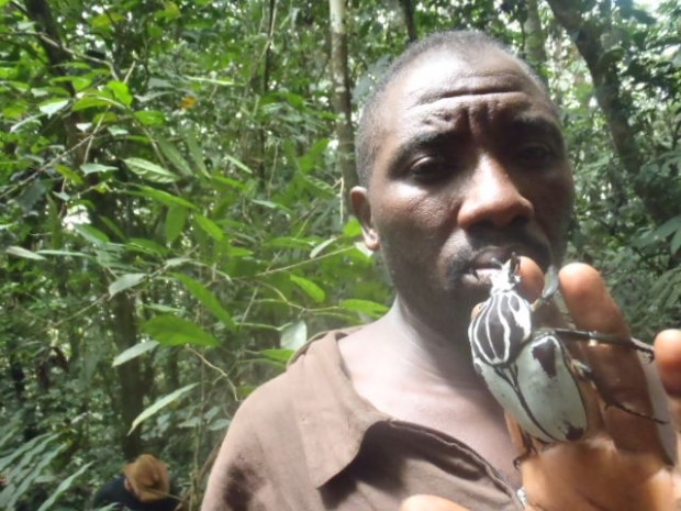 A local collector in Cameroon with a Goliath beetle – the 4th largest beetle in the world. Photo: John Fogoh Muafor