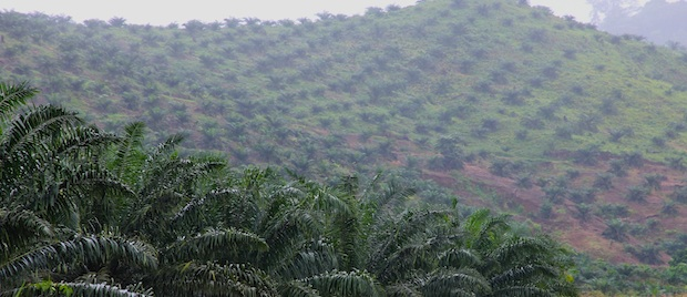 CDC plantations near Limbe, Cameroon.