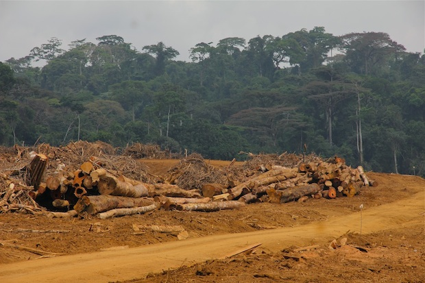 Forest clearing, Herakles Farms development, Southwest Region, Cameroon.