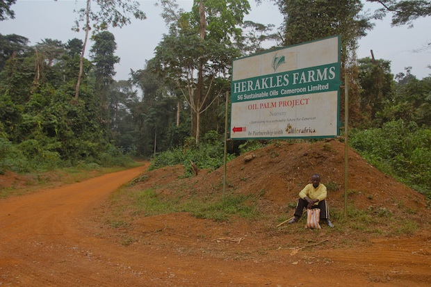 Entrance to Lipenja nursery. Lipenja, SW Region, Cameroon.