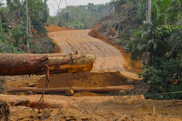 Herakles Farms forest clearing for road construction. Southwest Region, Cameroon