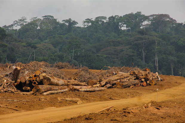 Herakles Farms clear-cut zone near Talangaye, Southwest Region, Cameroon.