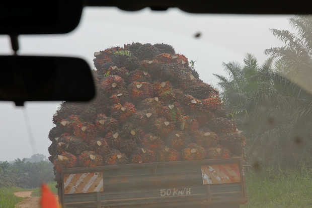 On the palm oil trail...